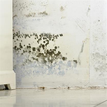 上海专业室内除霉公司,触媒剂研发企业,彻底解决房屋墙面、顶面发霉问题。